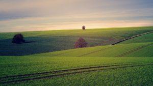 agricoltura 02 300x169 - agricoltura_02