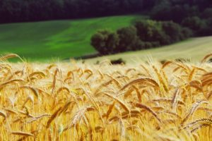 agricoltura 03 300x200 - agricoltura_03